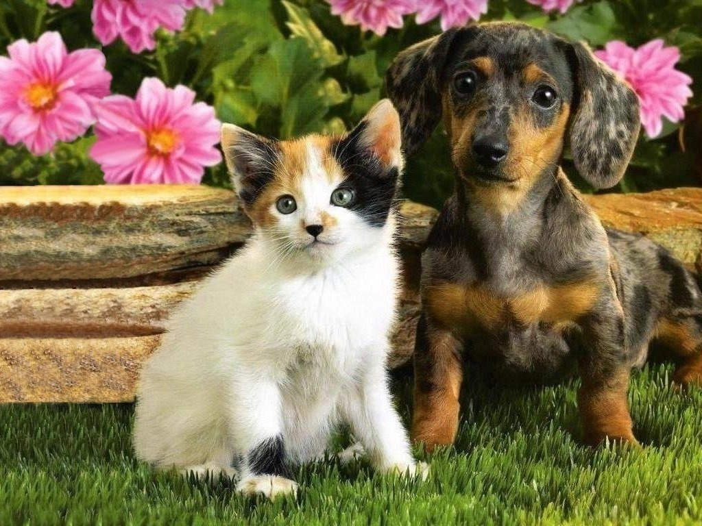 Kitten And Puppy Wallpaper For Iphone Is Cool Wallpapers