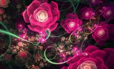 Pink Flower Designs Wallpaper Full Hd Is Cool Wallpapers
