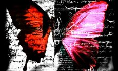 Red Butterfly Wallpapers Images Is Cool Wallpapers