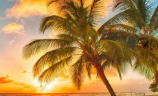 Tropical Beaches With Palm Trees S Wallpapers Wide Is Cool Wallpapers