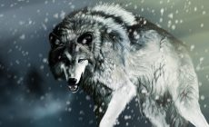 White Wolf Wallpapers Mobile Is Cool Wallpapers