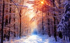 Winter Widescreen Wallpaper Is Cool Wallpapers