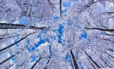 Winter Widescreen Wallpaper High Quality Resolution Is Cool Wallpapers