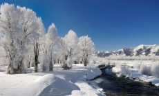 Winter Widescreen Wallpaper Phone Is Cool Wallpapers
