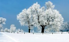 Winter Widescreen Wallpapers Desktop Background Is Cool Wallpapers