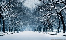 Winter Widescreen Wallpapers Full Hd Is Cool Wallpapers