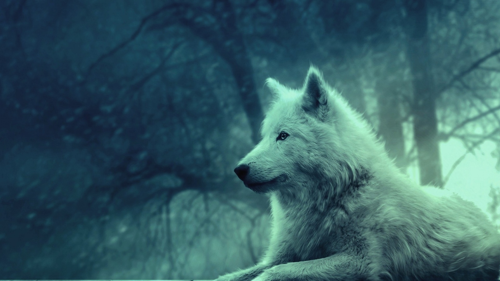 Wolf Images Is Cool Wallpapers