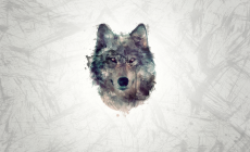 Wolf Wallpaper High Quality Resolution Is Cool Wallpapers