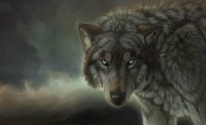 Wolf Wallpaper Images Is Cool Wallpapers