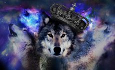 Wolf Wallpapers Is Cool Wallpapers