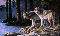 Wolf Wallpapers Desktop Background Is Cool Wallpapers