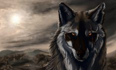 Wolf Wallpapers Widescreen Is Cool Wallpapers